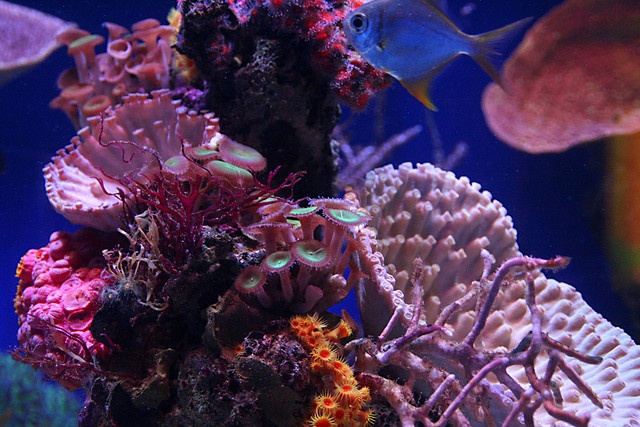 color palette: Sea Life, Inspirationmulti Colors, Sea Creatures, Colors Inspiration Multi, Colors Palettes, Inspiration Multi Colors, Photo, Coral Reefs, Colors Things