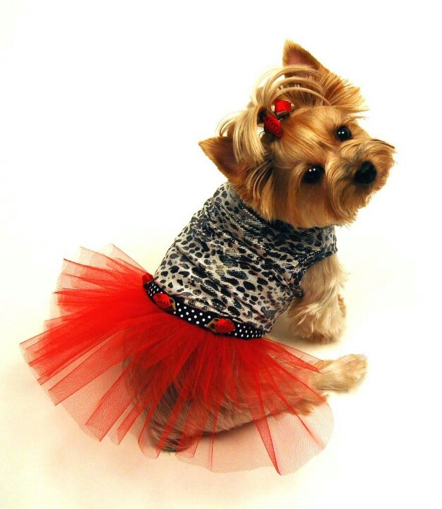 146 Best Images About Girl Dog Stuff On Pinterest Yorkie