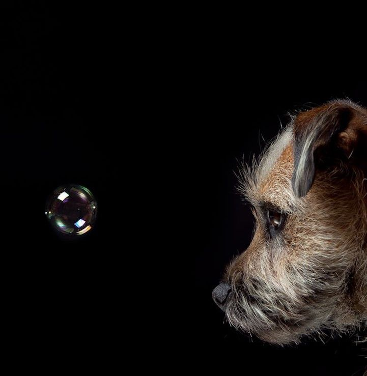 Hilarious and Heartwarming Dog Portraits by photographer Gerrard Charles Gethings - My Modern Metropolis