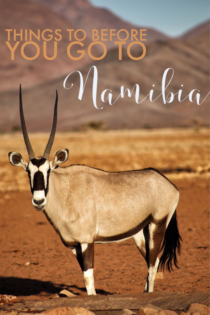 Heading to Namibia soon? Here are some Namibia Travel Tips to help you out!