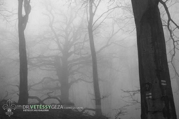 http://vetessy.hu/galeria/2014/Teli-cserkesztabor---Hidegkuti-Turistahaz/2-nap/42/view
