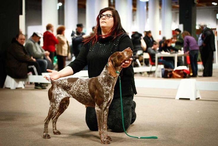 HIT Dog Show: il 13 e 14 febbraio 2016 torna in Fiera di Vicenza l'esposizione canina nazionale di razze da caccia o da compagnia.