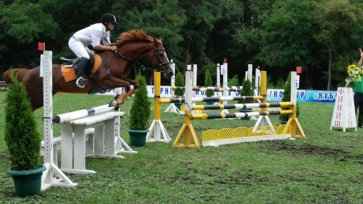 #лошади #животные