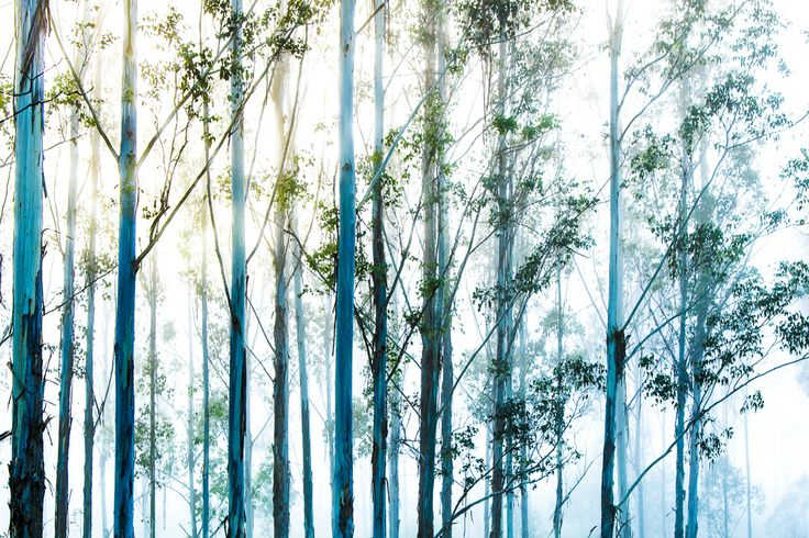 'Blue Trees' Open Edition Prints