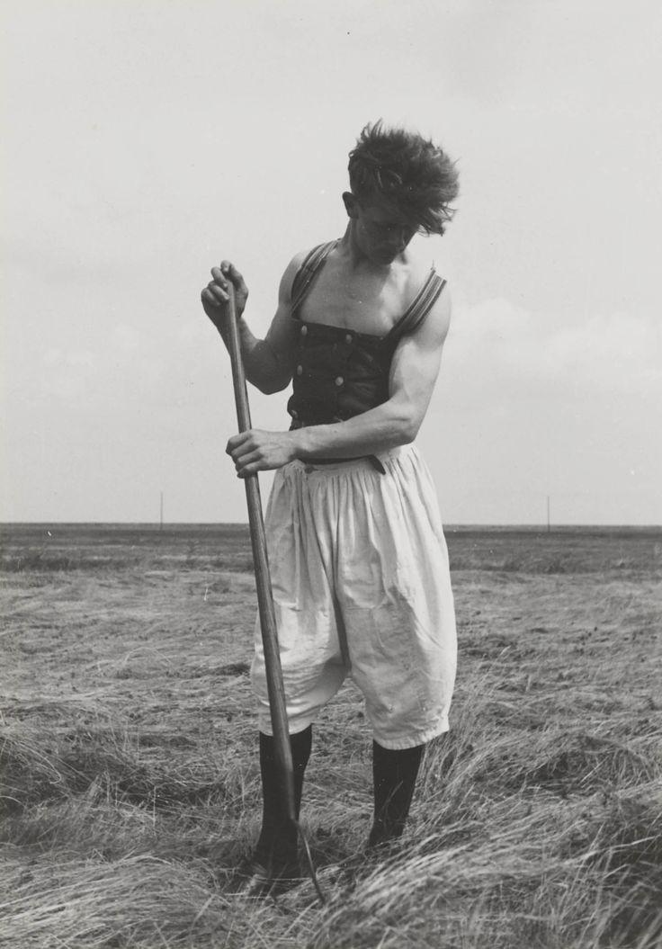 Jongeman uit Marken aan het hooien. Hij is gekleed in een witte broek en een 'gezondheid'. Dit kledingstuk van warme wollen stof wordt om het lichaam gedragen. 1943 #NoordHolland #Marken
