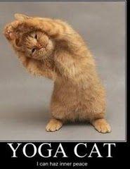 Yoga Cat #cute cats #amimals