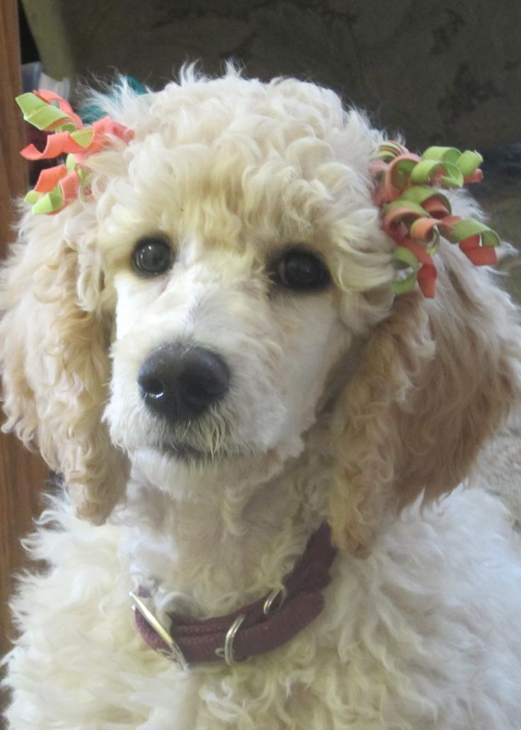 11 weeks old Effie Trinket. So beautiful!