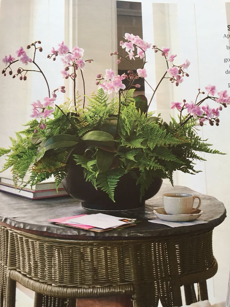 Orchids and ferns centerpiece for the home pinterest