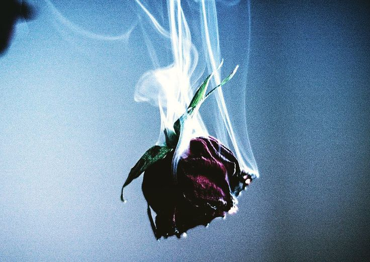 -Rose theme 5/12- You complete me . . . . #grungeaesthetic #creativephotography #myforever #myeverything #perfect #grunge #falling #grungetumblr #roses #saturation #dark #color #red #gloomy #deep #entire #myeverything #smoke #you #me #redrose #love #romance #dm #sfs #fff #theme #new #followme #photo #themes http://butimag.com/ipost/1554833979050725339/?code=BWT4UQeBo_b