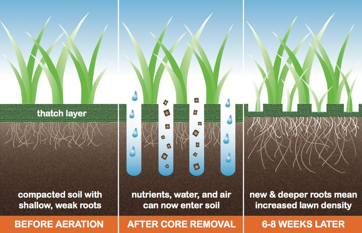 Good graphic explaining why core aeration will benefit your lawn.