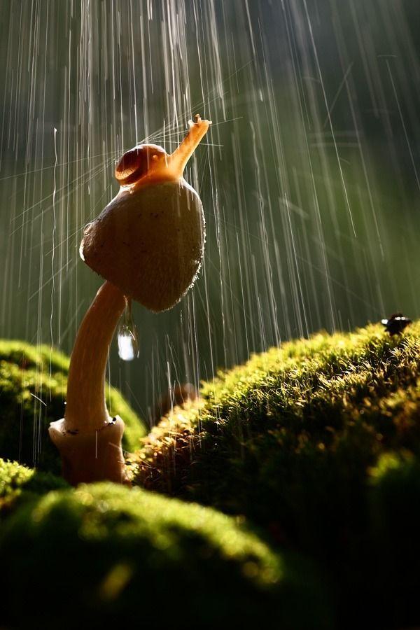 champignon - escargot - pluie