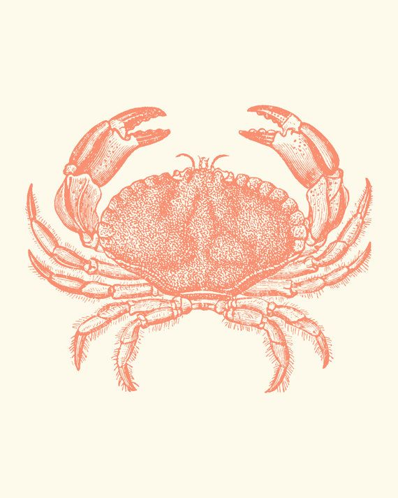 """Coral Pink Baltimore Steamed Crab Art - might need this handsome guy's picture for """"Eat Like A Viking"""" night."""