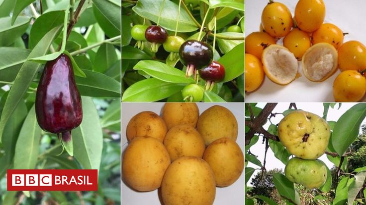 Espécies nativas que se tornaram desconhecidas dos brasileiros têm alto teor de antioxidantes e ação comparável à de anti-inflamatórios.