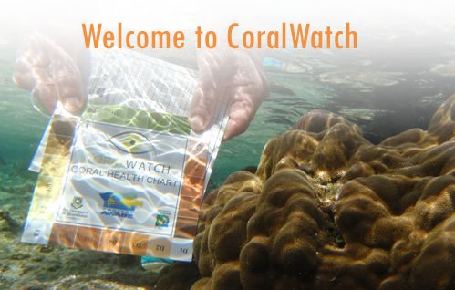 CoralWatch is a citizen science project based at The University of Queensland, in Brisbane, Australia. CoralWatch helps non-scientists around the globe understand and support effective reef management by using engaging tools that provide people with accessible information and hands-on-experience collecting scientific data about the health of corals using the Coral Health Chart.