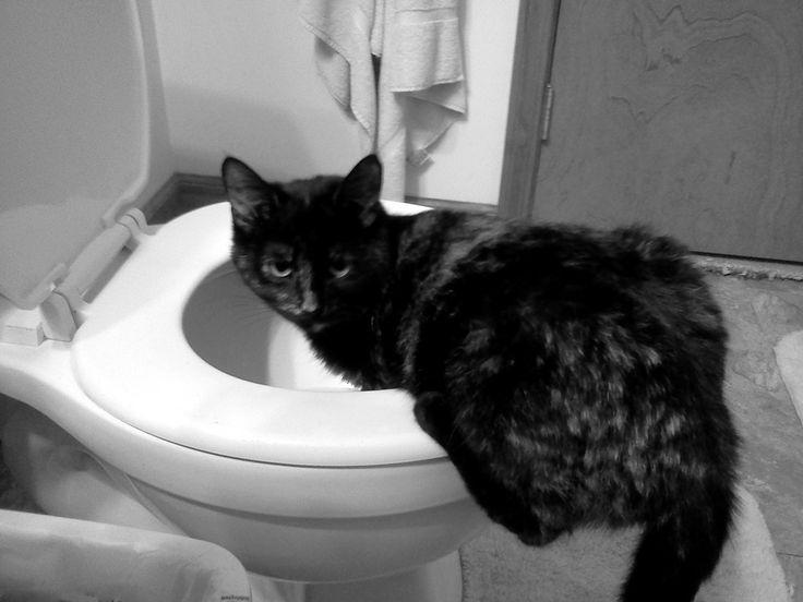 Cat Throwing Up White Foam