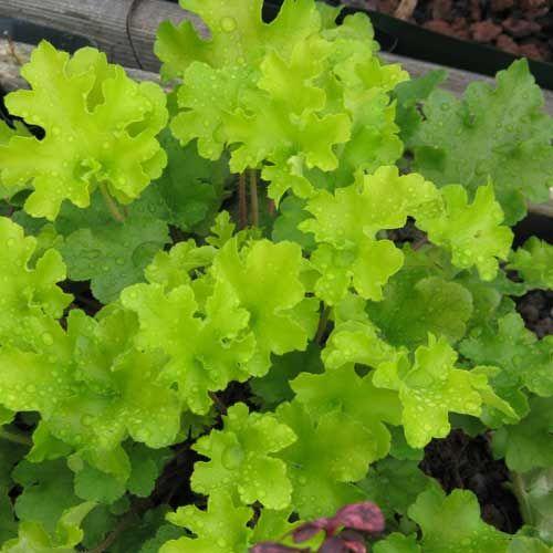 20 best Jardin ombre sèche images on Pinterest Perennial, Garden - hygrometrie dans une maison