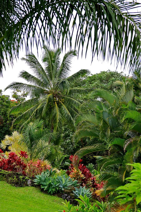 Top 25 ideas about tropical gardens and plants on for Tropical garden designs