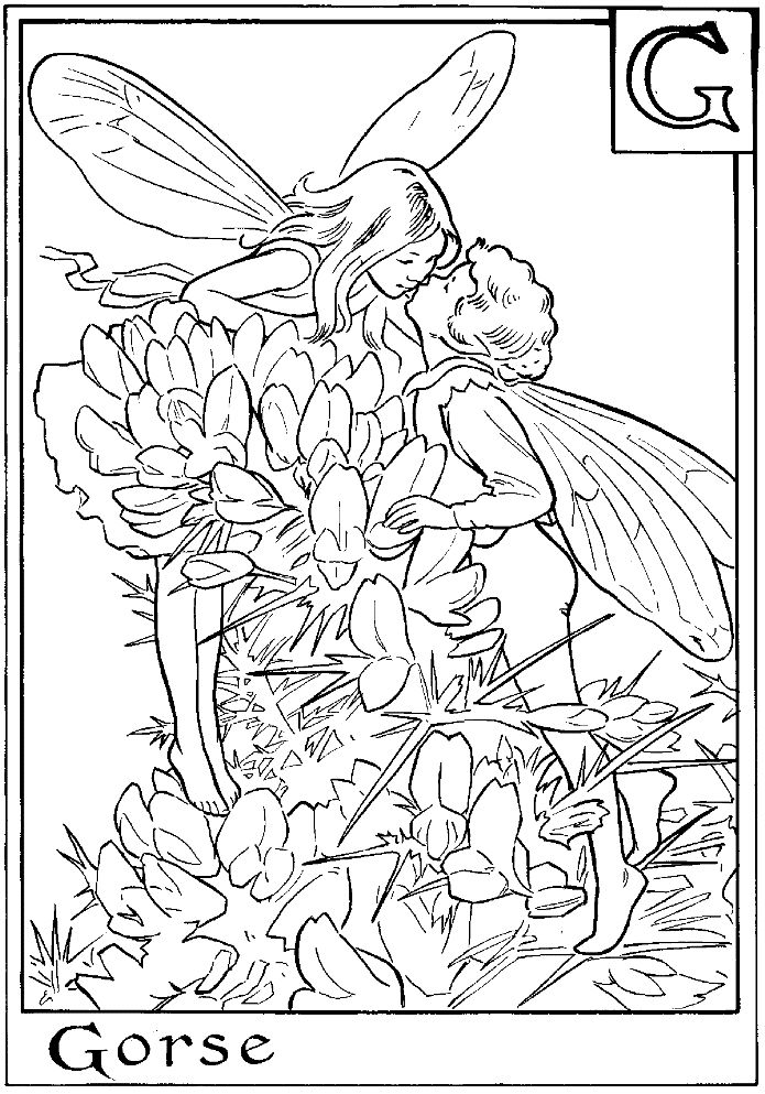 Letter G For Gorse Flower Fairy Coloring Page