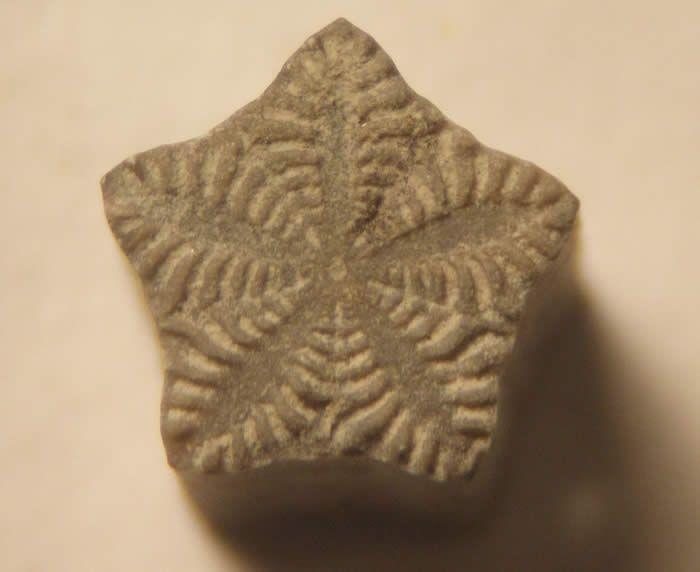Balanocrinus is an ornate star-shape crinoid columnal from the Jurassic.- Crinoid - Balanocrinus sp. -- Lias, Lower Jurassic of San Pedro Moel, Portugal