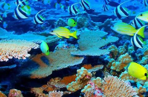 Scuba Diving at Tijou Reef, Port Douglas. http://www.ozehols.com.au/blog/queensland/scuba-diving-at-tijou-reef-port-douglas/ #Cairns #PortDouglas #VisitAustralia  @OzeHols - Holiday Accommodation