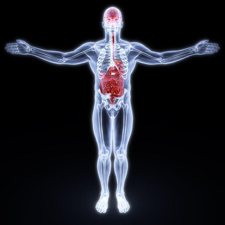 L'asse intestino-cervello