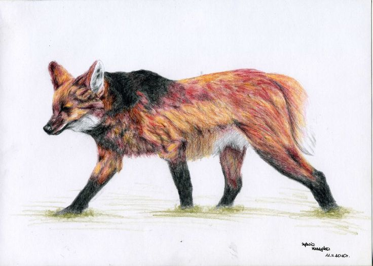 A Lot Of Maned Wolf By Loputyn Deviantart Com On: 10 Best Images About For A Future Story/comic Idea? On