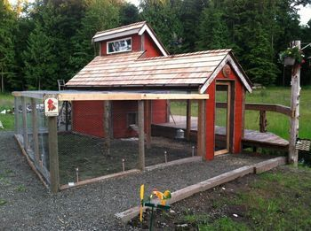 DIY chicken coop!