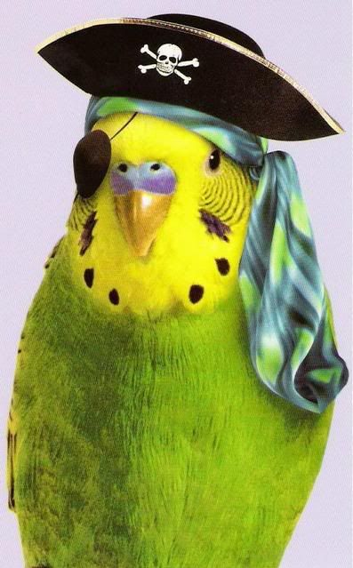 pirate parakeet just for my HENRY. ♡... re-pin by www.StoneArtUSA.com ~ affordable custom pet memorials for everyone.