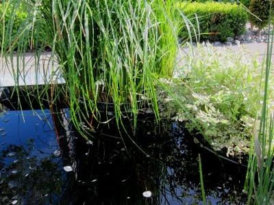 Anna Vattenkannas Trädgård: Vår L-formade damm