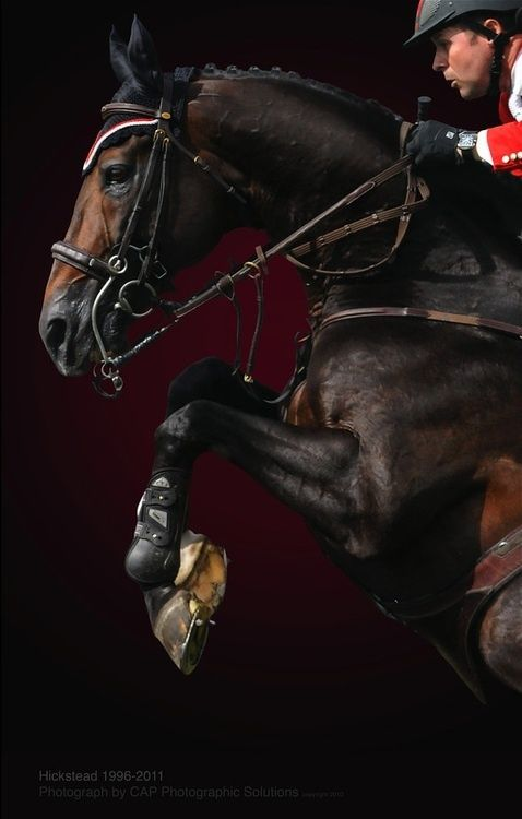 Hickstead my favorite famous horse ever RIP big guy ... Hunter jumper eventing horse equine grand prix dressage equestrian