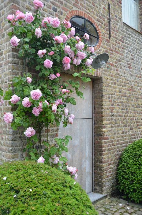 "Climbing roses, Garnier estate: ""Vaucelleshof"" image via Garnier (be) website as…"