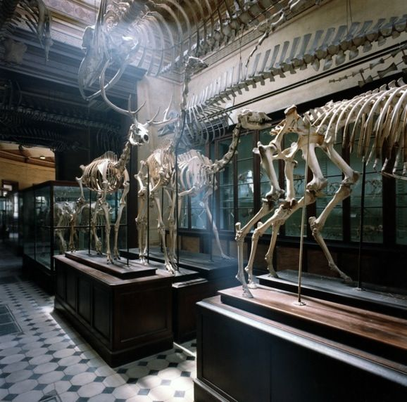 Museum of Natural Sciences, La Plata, Argentina, 1984