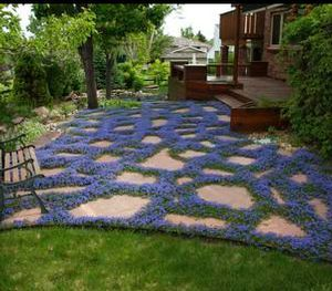 Patio Ground Cover Ideas creative juices decor ideas on landscaping with gravelrocks as a ground cover Turkish Veronica Veronica Liwanensis One Of The Most Beautiful Of All Ground Cover Patio Ideaslandscaping