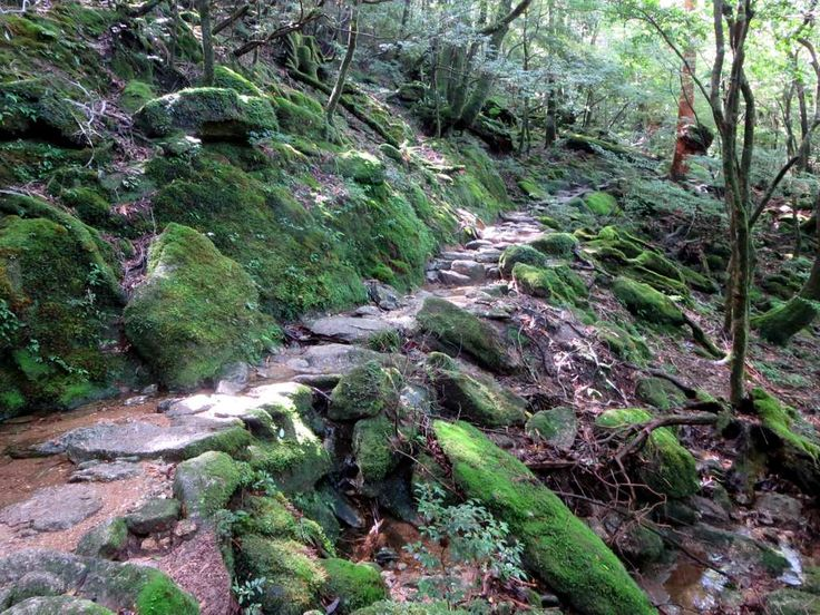 The Taikoiwa Trail climbs through the Shiratani Unsuikyo Natural Forest on Yakushima Island, Japan. The area has been declared a UNESCO World Heritage site.
