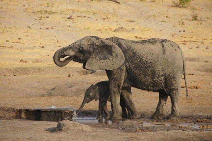 Elephants at a waterhole in dry-season Hwange