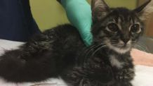 Abused kitten found with bound paws in Spring!