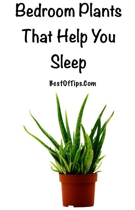 Good bedroom plants