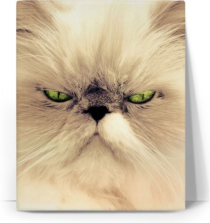 Check out my new product https://www.rageon.com/products/angry-cat-art-canvas-print?aff=BWeX on RageOn!