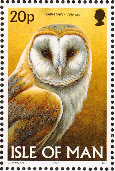 Barn owl on stamp isle of man