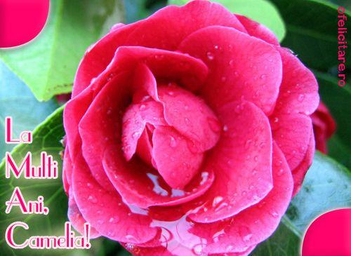 Felicitare de Florii cu mesajul La multi ani, Camelia!