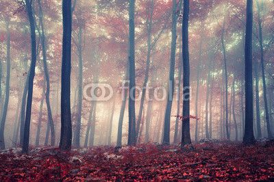 Mystic forest ©robsonphoto
