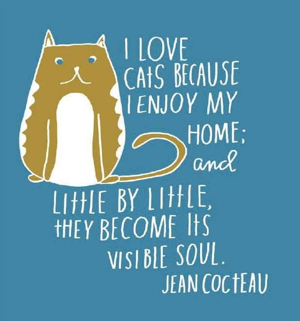 """""""I love cats because I enjoy my home, and little by little, they become its visible soul."""" Jean Cocteau"""