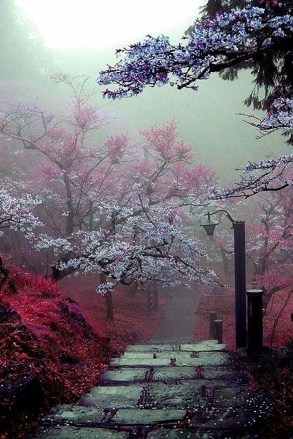 a path to follow. #misty percorso nebbioso e fiorito