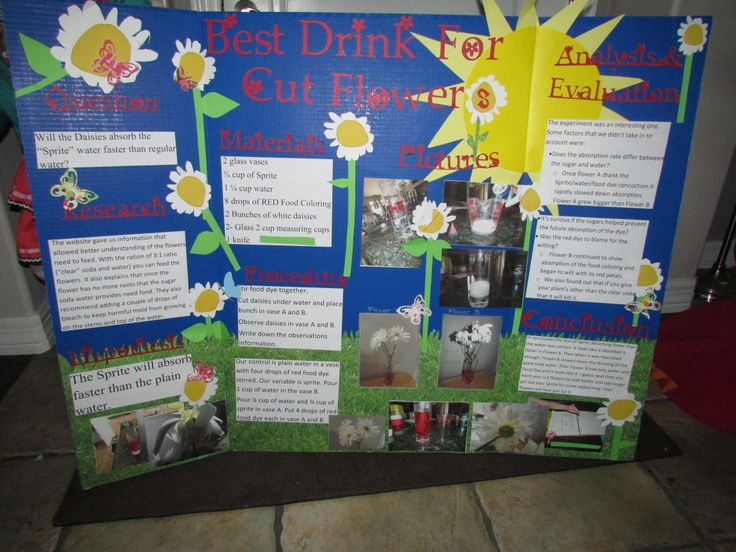 Poster Board Ideas For The Center : Best images about science fair on pinterest happy