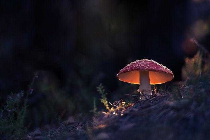 © Vyacheslav Mishchenko маленький объект уравновешивает большое пространство благодаря высокому контрасту