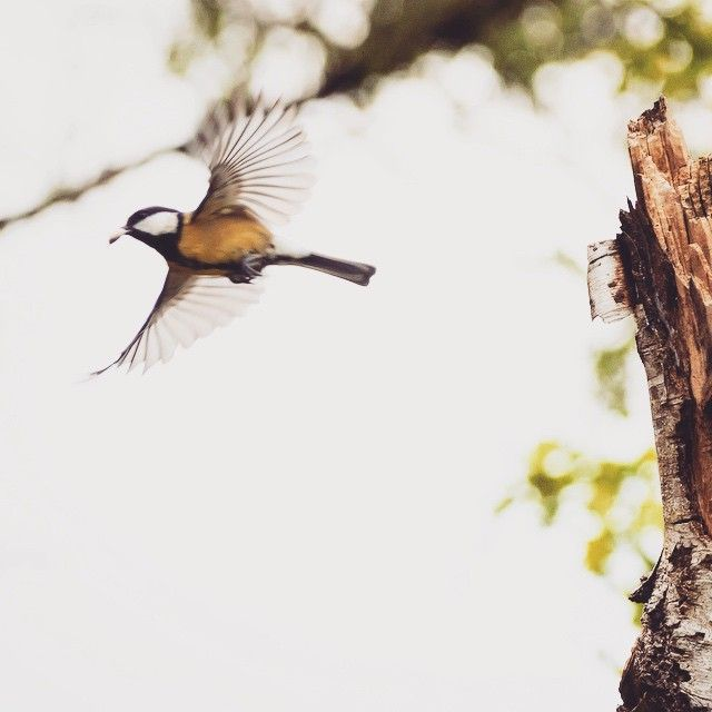 """""""#great #tit #instagood #cute #photooftheday #happy #beautiful #picoftheday #summer #NetNeutrality #instadaily"""""""
