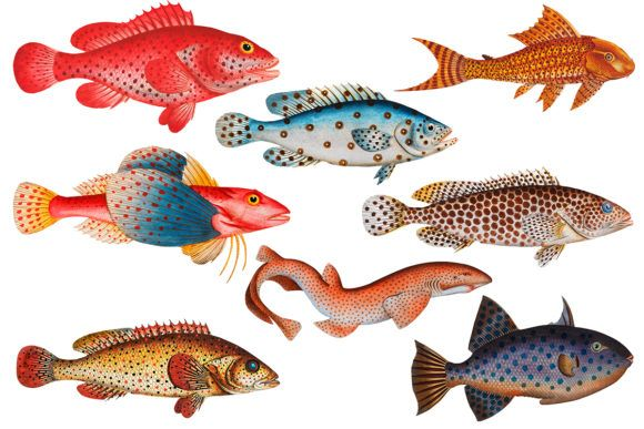 Vintage Polka Dot Fish Illustrations Graphic By Surfnostalgia Creative Fabrica In 2020 Fish Illustration Pretty Fish Illustration