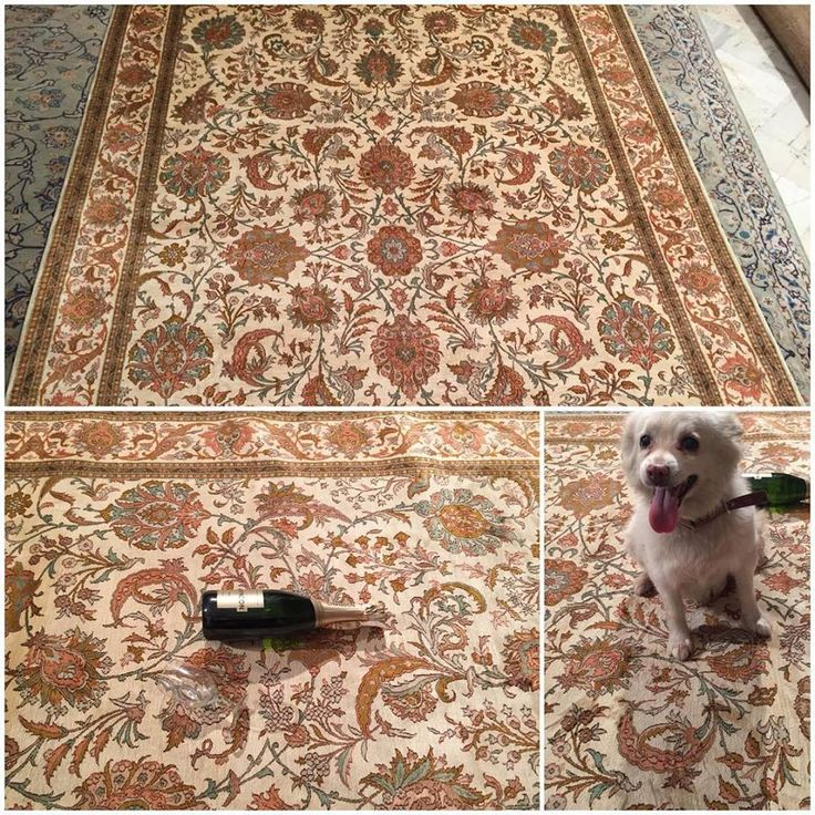 1) Spilled Wine on your expensive Rug 2) Your Lil Pooch ruined your treasured beauty?   FRET NOT. Rugs and Beyond offers the perfect solution for you.  Click on http://bit.ly/1RSwAPd to read our Tips and Tricks to clean up those Ugly Spots!! FYI- The Rug shown in the pic is a Stunning Handknotted Kashmir Silk on Silk rug of the Finest Quality .Size is 6x9ft and Design - All over Kashan -Price on Request! It has taken 11 months to weave it! #homedecor #interiordesign #pinefire