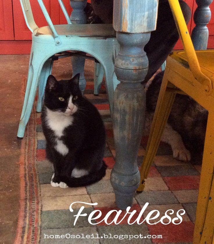 Janvier ´17_ Fearless (Kalkan, Turquie)