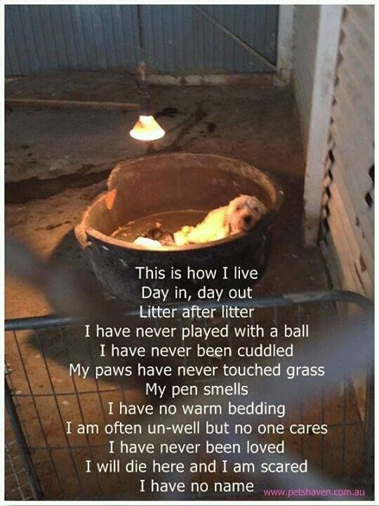 Don't shop, adopt.  That means no pet stores, no puppies out of boxes at Wal-Mart, no buying off Craislist (unless you can visit the home)...Puppy Farming needs to end!!! Please share, it will only take 2 seconds but if it stops just one person from buying a puppy from a puppy farm then it's worth it. DO NOT buy from pet shops and DO NOT buy puppies when you can't see mum and dad!! Or better still...RESCUE!